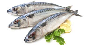 Chả cá thu MẠ 24H được làm từ nguồn cá thu tươi hay cá kem?